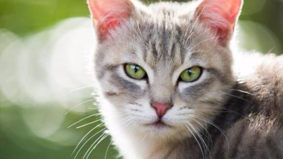 fotos de gatos de estimacao 4