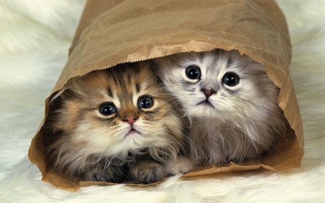 os-menores-gatos20